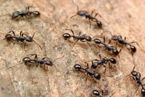 بالتفصيل كل ما تود معرفته عن النمل أسباب وجوده – أضراره- طرق الوقاية الطبيعية من النمل