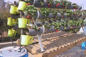تعرف علي الأدوات المطلوبة لزراعة الأسطح بأقل التكاليف