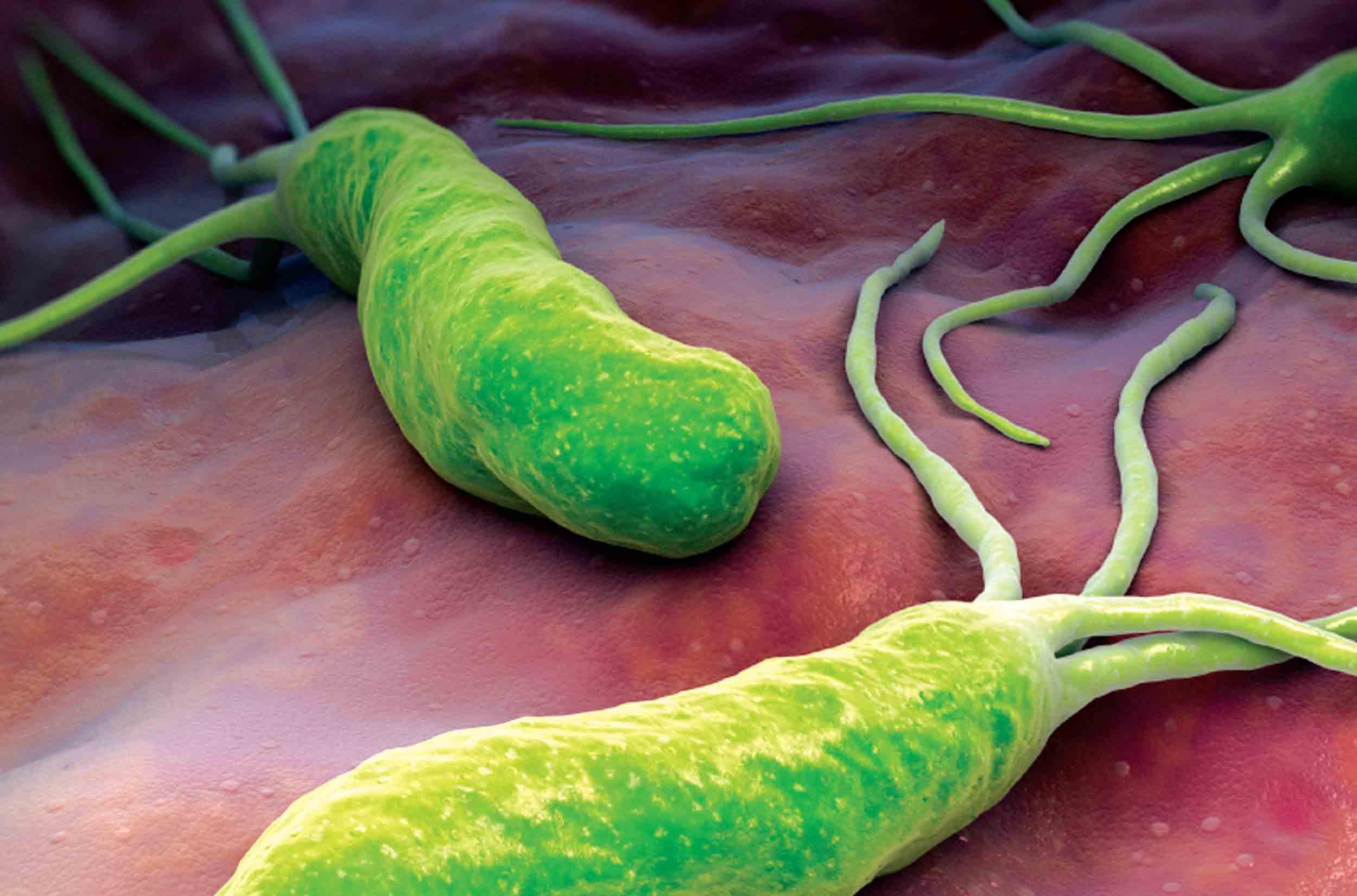 الشفاء من الميكروب الحلزونى