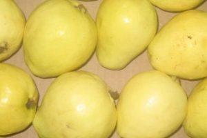 عودة تصدير الجوافة المصرية إلى المملكة العربية السعودية من جديد