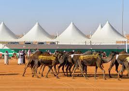مهرجان الملك عبد العزيز لمزاين الابل طريقة التسجيل والشروط والجوائز