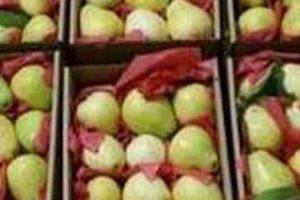 الجوافة المصرية تعود من جديد للمملكة العربية السعودية