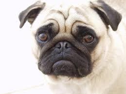 معلومة صادمة : الكلب يستطيع قراءة وجهك