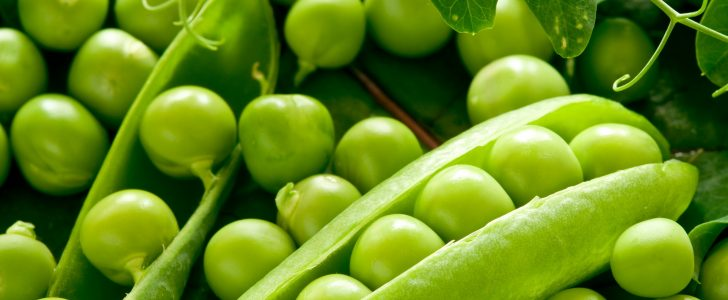 فوائد تتناول البازلاء او البسلة الخضراء على صحه الانسان