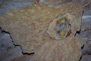 مواطن أسيوطي يعثر علي  رأس عصفور برغيف العيش