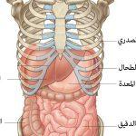 الحفاظ على الكبد : طرق ونصائح للحفاظ علي الكبد ومشروب سحري لنظافته
