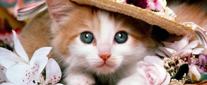 أسعار وأنواع القطط فى مصر طباع كل نوع ومميزاته للتربية فى المنزل
