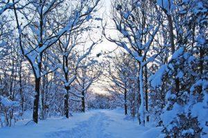 موضوع تعبير عن فصل الشتاء وأهميته لكافة المراحل التعليمية وطلاب المدارس كامل بالعناصر