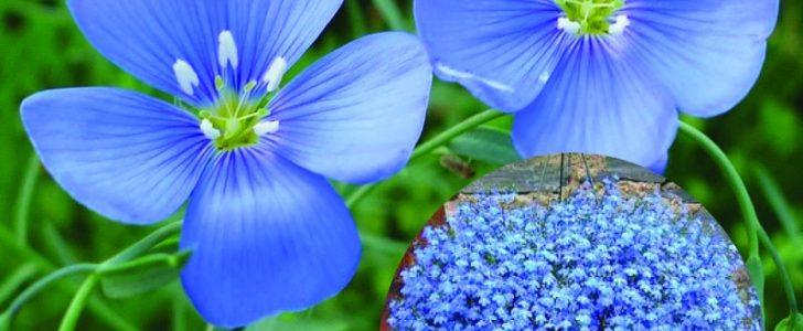 القرأن والتنوع البيولوجي في النباتات