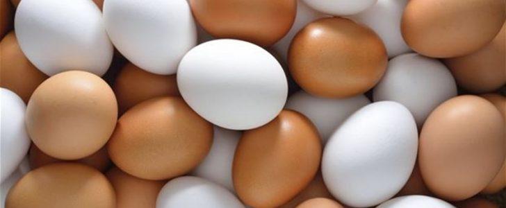 اوجه الاختلاف بين البيض الأبيض والبنى والأورجانيك وفوائد تلك الأنواع