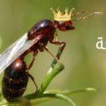 فوائد واضرار لدغة النمل مع طرق وكيفية العلاج