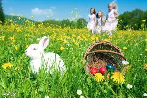 معلومات مهمة عن أهمية فصل الربيع لصحة الإنسان النفسية والجسدية